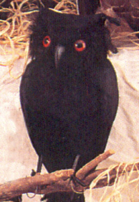http://www.proppersource.com/images/birds/owl-black1-w200.jpg